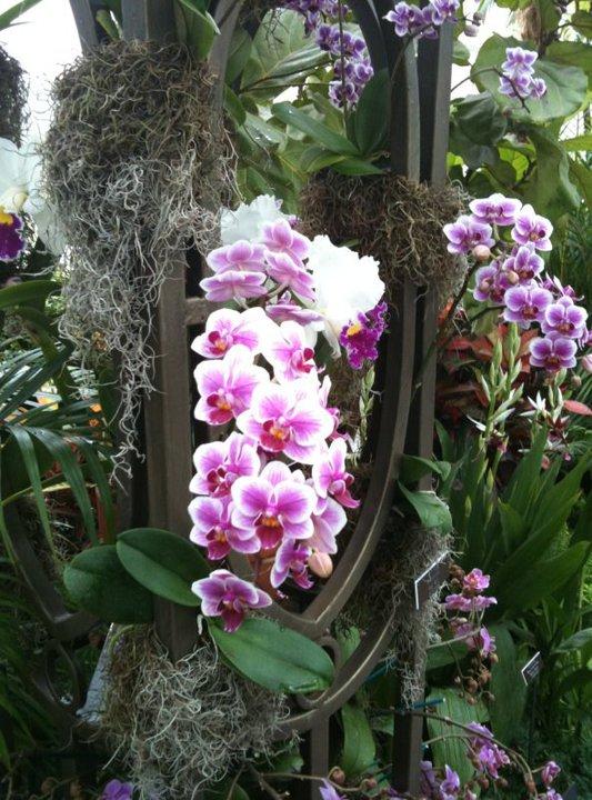 New York Botanical Garden Orchid Show Discount New York