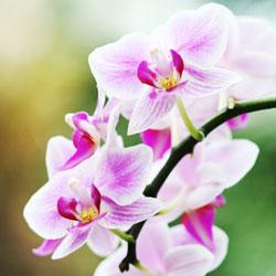 New york botanical garden orchid show discount nyc cheap - New york botanical garden promo code ...
